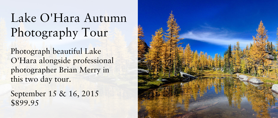 Lake O'Hara Autumn Photography Tour