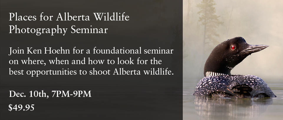 Places for Alberta Wildlife Photography Seminar